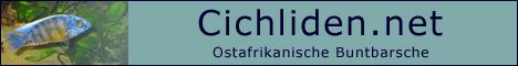 Cichliden-Net